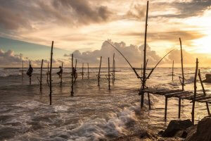 Stilt fishermen in south Sri Lanka